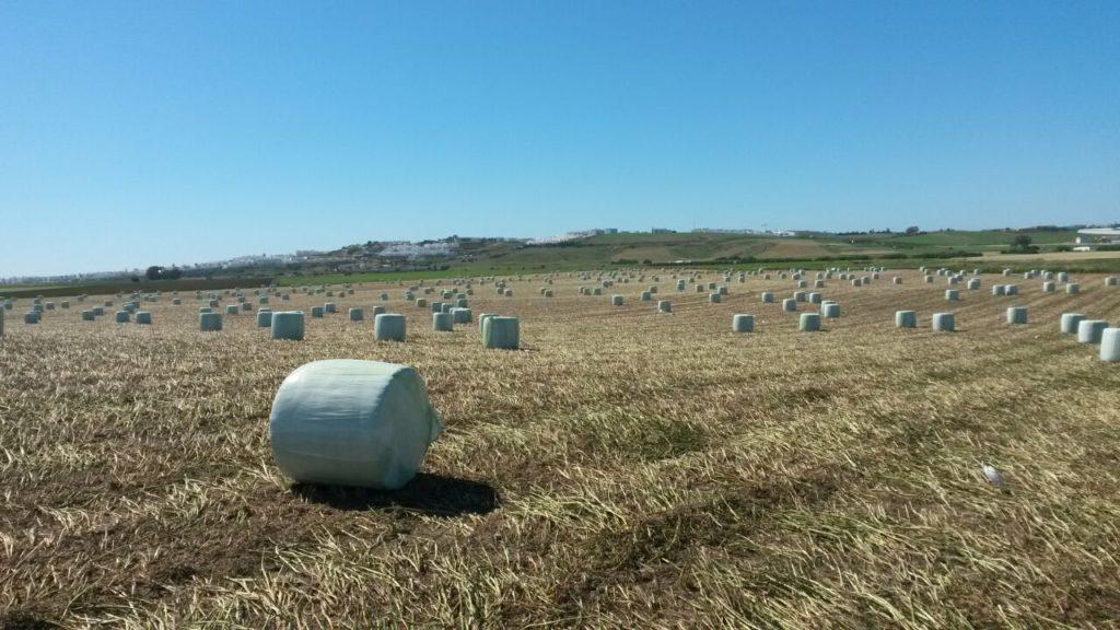 Venta de alfalfa cadiz